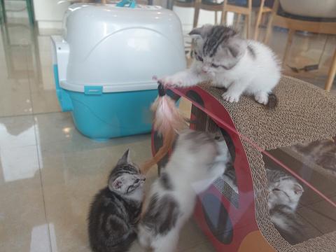 猫咖咖啡屋