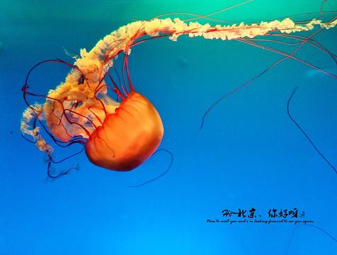 北京海洋馆的图片