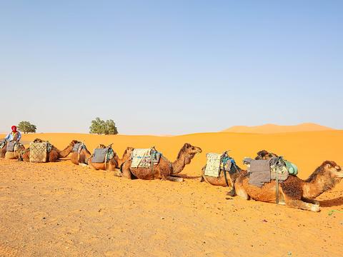 撒哈拉大沙漠旅游景点图片