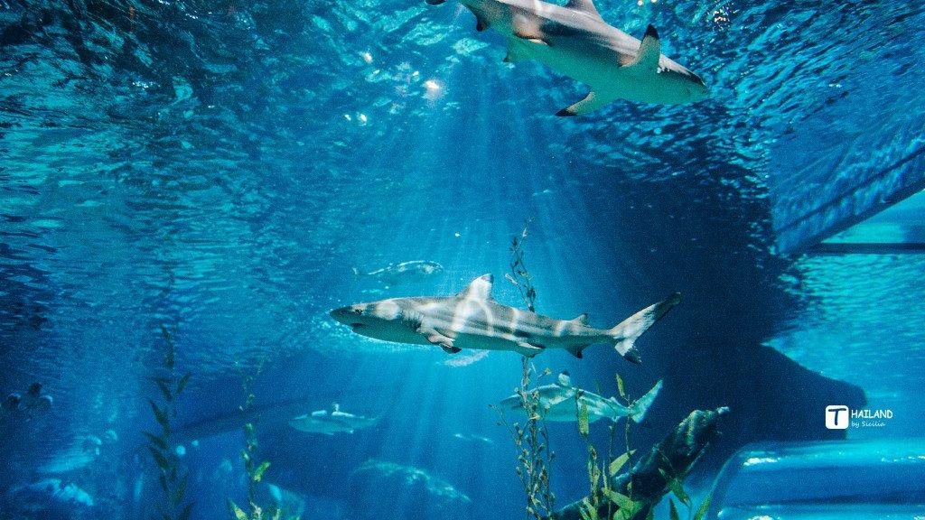 你终究还是爱看海啊——记你的第一次泰国