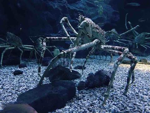 大阪水族馆旅游景点攻略图