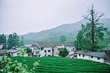 龙井山园茶文化村