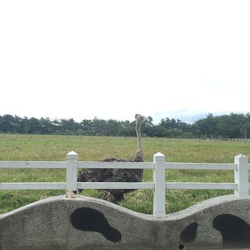 瑞穗牧场旅游景点攻略图