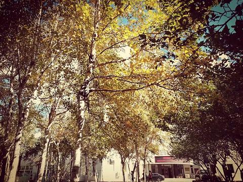 东北师范大学旅游景点图片