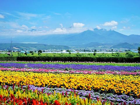Flower Land上富良野旅游景点图片