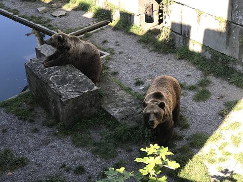 伯尔尼熊公园旅游景点图片