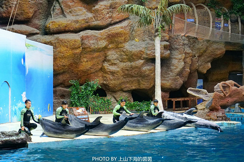 杭州长乔极地海洋公园的图片