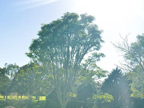 奥克兰植物园旅游景点图片