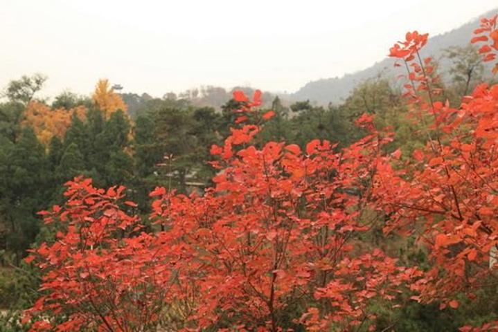 """""""北京鹫峰国家森林公园梅园是我区面积最大,品种最多的梅园,目前已成功植栽了杏梅系、真梅系、樱李梅..._鹫峰国家森林公园""""的评论图片"""