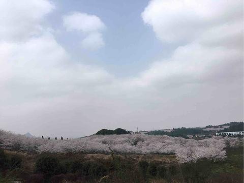 平坝农场旅游景点攻略图