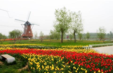 关山荷兰风情园旅游景点攻略图