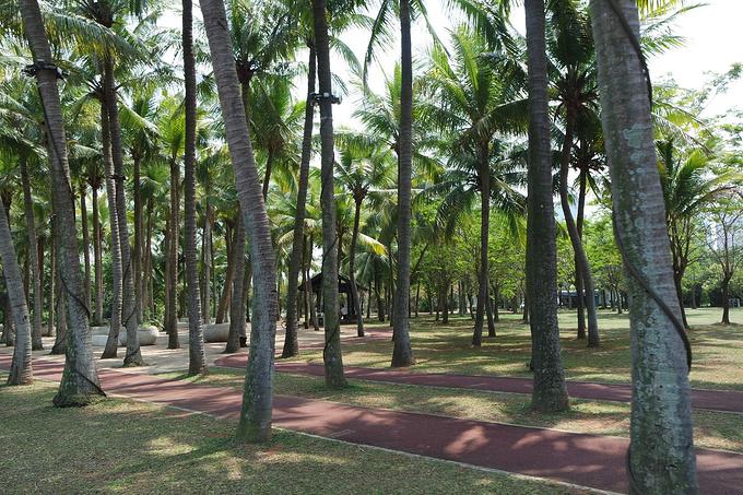 共享单车游椰城图片