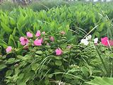 海东湿地公园