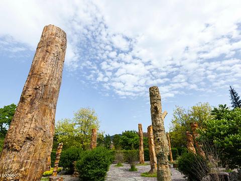 硅化木王国旅游景点图片