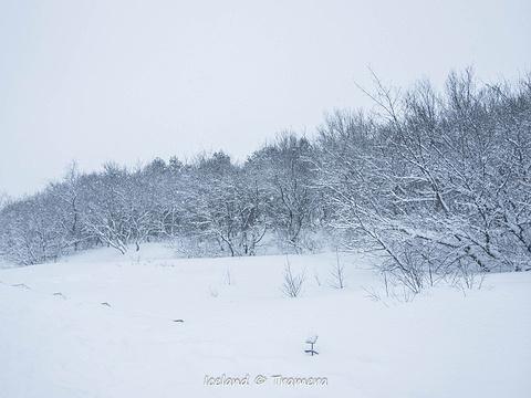 辛格维利尔国家公园旅游景点图片