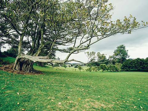 一树山旅游景点图片