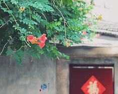 四季流转 日常即美 本地文青带你走进南京的生活美学
