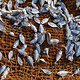 尼甘布中心鱼市场