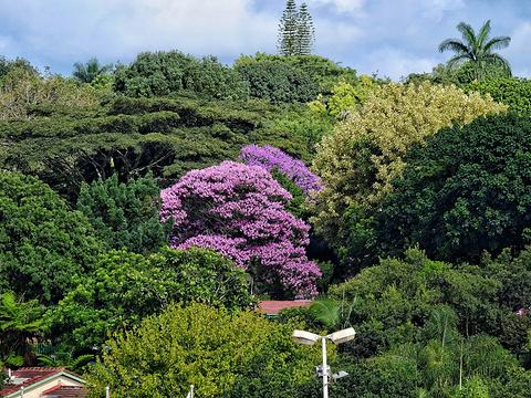 花园大道旅游景点图片