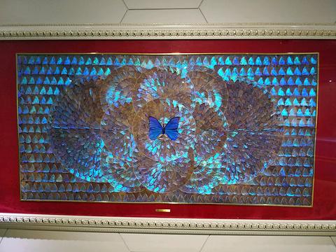 上海昆虫博物馆旅游景点图片