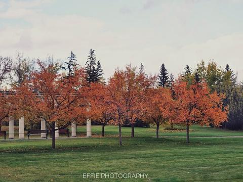 Baker Park旅游景点图片