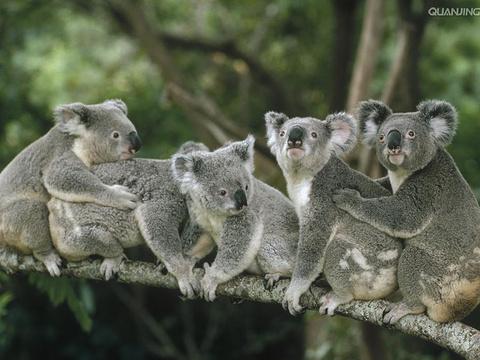 龙柏考拉保护区旅游景点图片