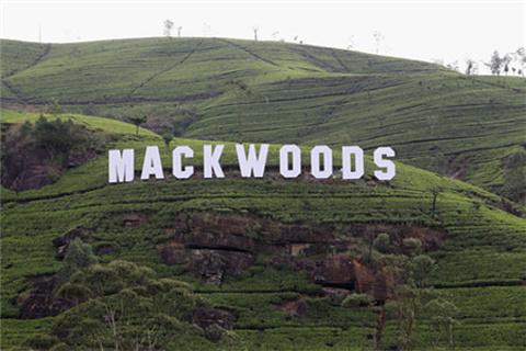 Mackwoods茶厂的图片