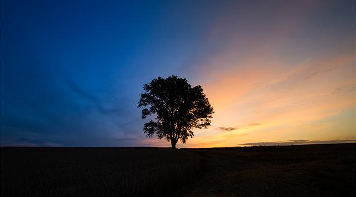 哲学之树旅游图片