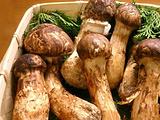 沙溪镇蔬菜市场