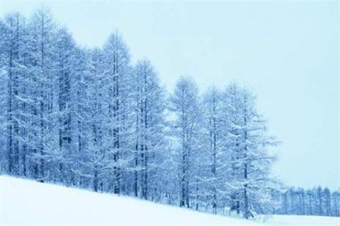 雪岭云杉自然保护区