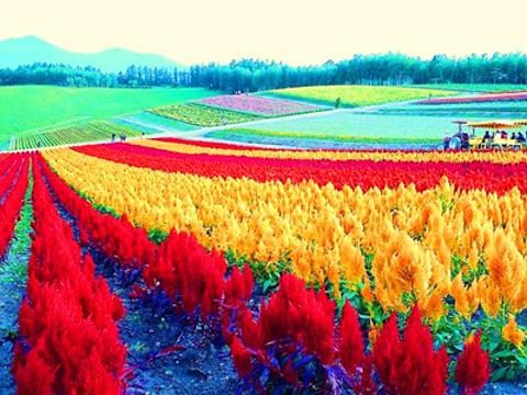四季彩之丘旅游景点图片