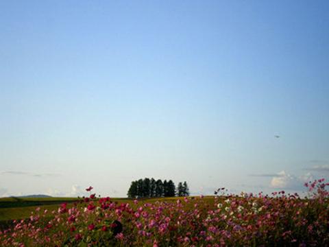 Shinei Hills Prospect Park旅游景点图片
