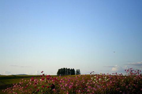 Shinei Hills Prospect Park的图片