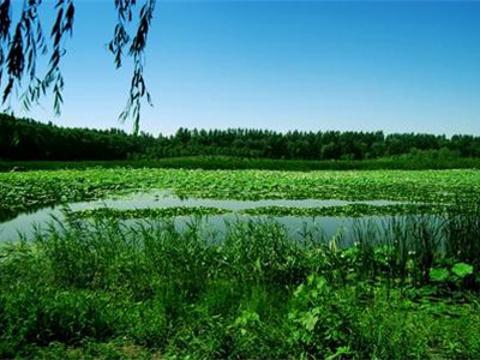 汉石桥湿地旅游景点图片