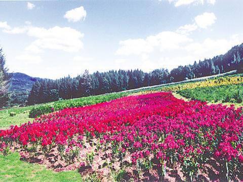 高山花园旅游景点图片