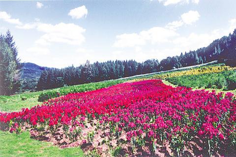 高山花园的图片