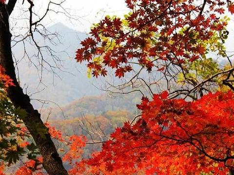 枫林谷森林公园旅游景点图片
