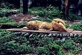 碧峰峡野生动物园