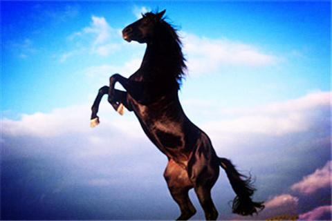 逍遥骑士农庄的图片