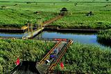 辽河湿地森林公园