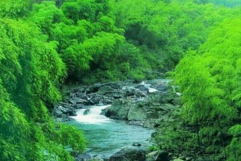 浙东大竹海景区