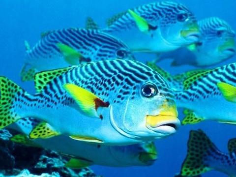 金鹰海洋世界的图片