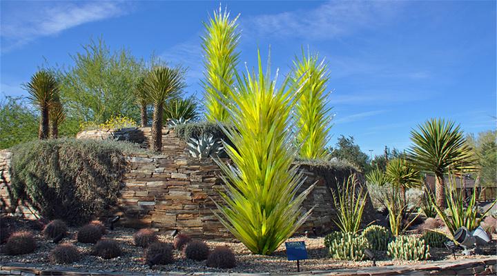 沙漠植物园旅游图片
