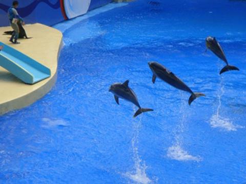 青岛海昌极地海洋公园旅游景点图片