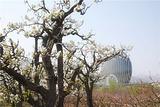 梨之花韩国风情园