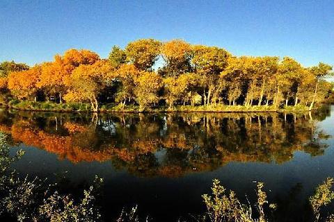 金湖杨国家森林公园的图片