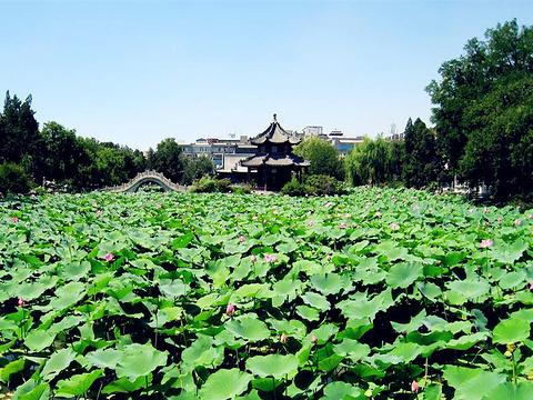 古莲花池旅游景点图片