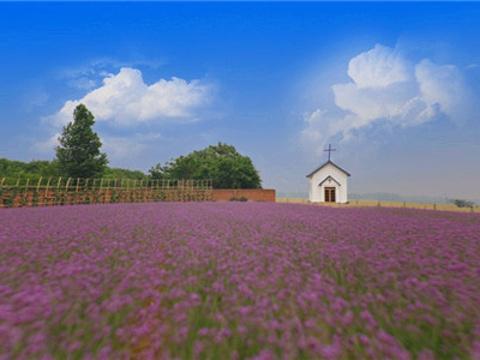 紫缘香草园旅游景点图片