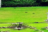 台湾孔雀园