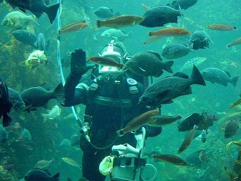蒙特利湾水族馆旅游景点图片